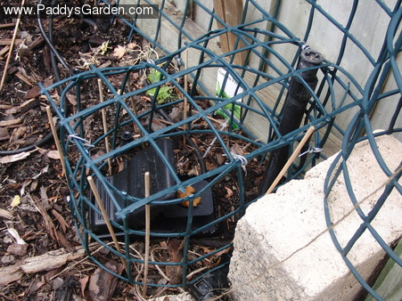 A protective fence around the rat trap