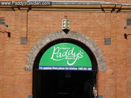 Paddy's markets