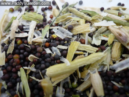 Paddy's bok choy seeds