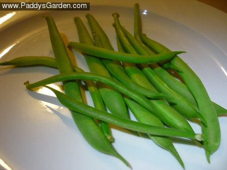 Paddy's beans